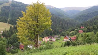 Beautiful green forest in mountains and cottages with red roofs