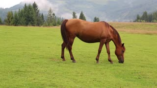 Beautiful horse in the grassland