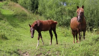 Beautiful horses on the green grassland