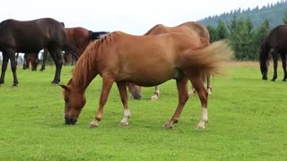 Beautiful horses on the green pasture