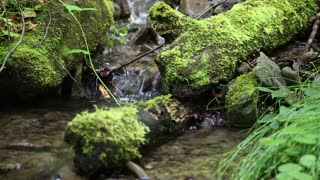 Beautiful small brook and green moss