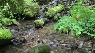 Beautiful small brook and green plants