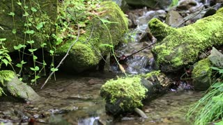 Beautiful small brook and stones with green moss, sound