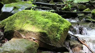 Beautiful small brook and stones with green moss. Video with sound