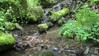 Beautiful small brook and stones with green moss, video with stereo sound