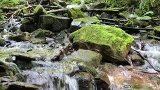 Beautiful tiny brook in forest with cold water