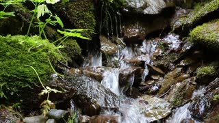 Beautiful tiny brook with cold water