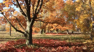 Beautiful trees video stock footage