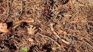 Big ants army in forest