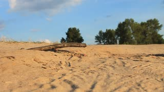 Big caterpillar creep on sand