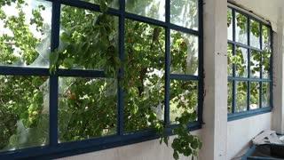 Broken windows inside abandoned hotel