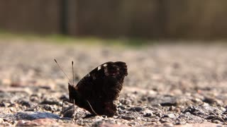 Butterfly on the highway