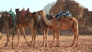 Camels in Wadi Rum desert, Hashemite Kingdom of Jordan. Wadi Rum, also known as Valley of the Moon, is largest wadi or valley in Jordan, that consists of sand, sandstone and granite rocks or mountains