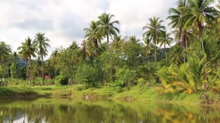 Coconut palms near the lake, Koh Chang island in Thailand
