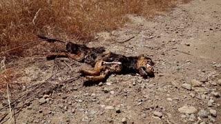 Dead dog lying on earth road