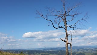 Dead tree and beautiful sky with clouds