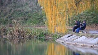 Fishermens under yellow willow