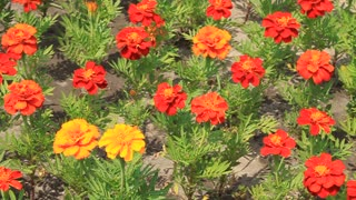 Flower bed with red and yellow flower