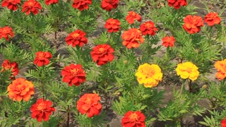 Flowerbed with red and yellow flower