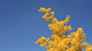 Fresh yellow flowers