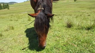 Funny horse on green meadow