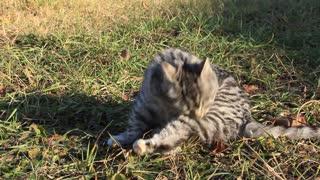 Funny kitten video stock footage