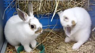Funny rabbits in pet shop