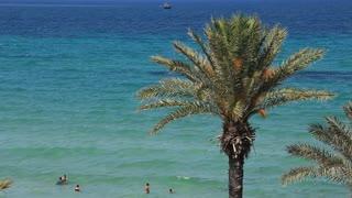 Green palm and Mediterranean Sea