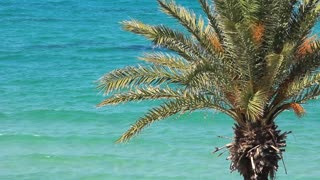 Green palm and sea
