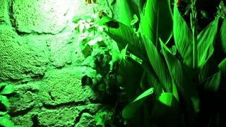Green plant under green light