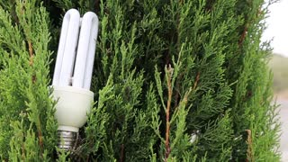 Green tree and energy-saving light bulb