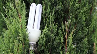 Green tree and energy saving light bulb