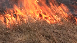Ignition of dry grass