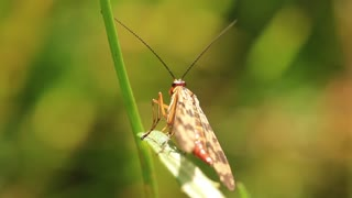 Insect on twig video stock footage