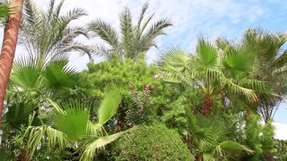 Jungle. Green palms and blue sky with clouds