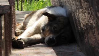 Little dog video stock footage