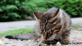 Little hungry kitten eats bread