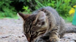 Little kitten eats bread