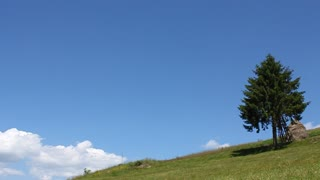 Lonely coniferous tree on sky background