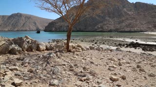 Lonely tree without leaves. Sultanate of Oman, Musandam, Gulf of Oman. Oman - arab country in southeastern coast of the Arabian Peninsula. Musandam - governorate of Oman, located on Musandam peninsula