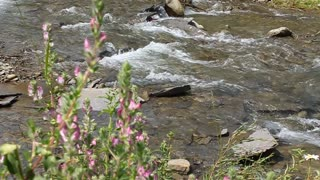 Mountain river and wild flowers