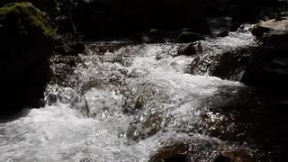 Mountain stream in Carpathian Mountains