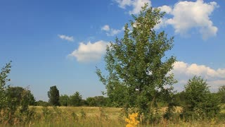 Nature. Green tree, yellow meadow and blue sky with clouds
