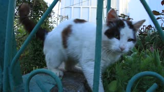 Playful cat video stock footage