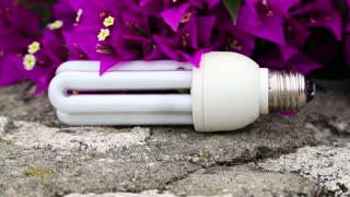 Purple flowers and energy-saving light bulb