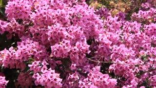 Purple flowers video stock footage
