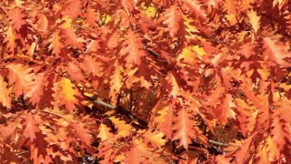 Red and yellow leafs