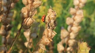 Red ladybug on the stem