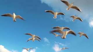 Seagulls flying on the beach in Dubai. Seagulls on a background of sky and clouds