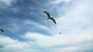 Seagulls flying video stock footage